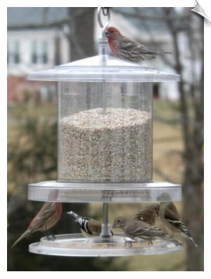 "All Weather Feeder - 6 Quart - Clear <br><span style=""color:#1954e9;"">New Item!</span>"