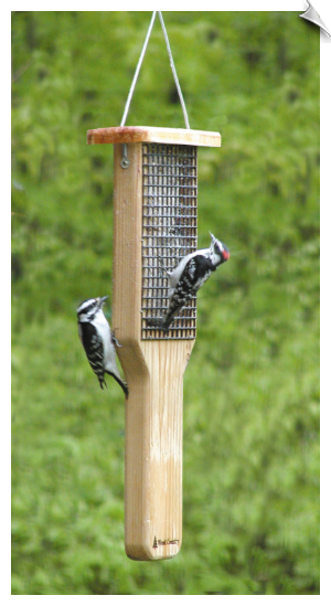 Double Cake Pileated Suet Feeder
