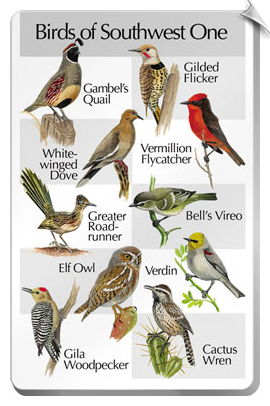 BirdSong IdentiFlyer SongCard <br>Birds of Southwest One