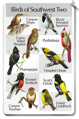 BirdSong IdentiFlyer SongCard <br>Birds of Southwest Two