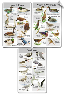 Thee Card Set - Birds of the Lakes, Rivers, Marshes & Seashore