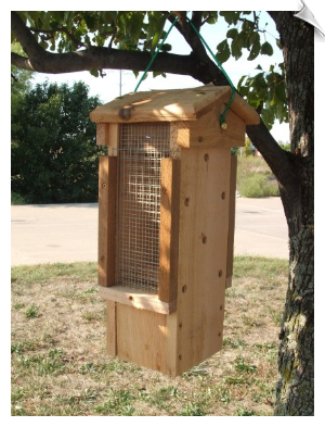 Ultimate Woodpecker Feeder