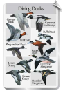 BirdSong IdentiFlyer SongCard - Diving Ducks