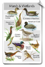 BirdSong IdentiFlyer SongCard <br>Birds of the Marsh and Wetlands