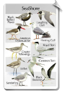 BirdSong Identiflyer SongCard <br> Birds of the Seashore
