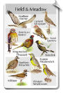 BirdSong IndentiFlyer SongCard <br>Field and Meadow