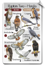 BirdSong IdentiFlyer SongCard<br>Raptors Two - Hawks