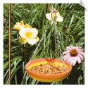 "Ceramic Oriole Feeder <br><span style=""color:#1954e9;"">New Item!</span>"